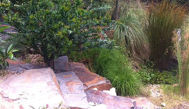 Unique native gardens